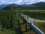 The Trans-Alaska Pipeline Runs Through the Alaskan Wilderness Photographic Print by Melissa Farlow