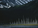 Trees Killed During the 1964 Earthquake Line the Alaskan Shore Photographic Print by Karen Kasmauski