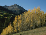 A View of Quaking Aspen Trees with Red Mountain in the Background Photographic Print by Marc Moritsch