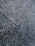 Tree Branch in the Ice Photographic Print by Marc Moritsch