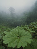 Fog and Rain Forest Foliage, Costa Rica Photographic Print by Michael Melford