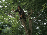 A Turkish Woman with a Sickle in Her Hand Climbs out onto a Tree Limb Photographic Print by Randy Olson