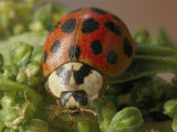 Close View of a Ladybug Photographic Print by Darlyne A. Murawski
