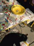 A Cat Lies on a Chair by a Table That is Set for a Meal Photographic Print by Tino Soriano