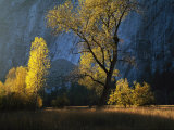 The Evening Sun Shines on Leidig Meadow Photographic Print by Marc Moritsch