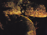 Close View of Lizard Photographic Print by Mattias Klum
