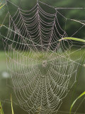 A Spiderweb Covered in Dew Photographic Print by Darlyne A. Murawski