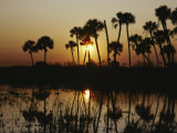 The Flaming Orange Sun Sets Behind Silhouetted Cabbage Palms and Cordgrass Photographic Print by Bates Littlehales