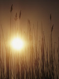 View of the Setting Sun Behind Tall Grasses Photographic Print by Bill Curtsinger