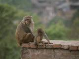 Monkeys Watch the Tourists from a Brick Wall in Kathmandu, Nepal Photographic Print by Bobby Model