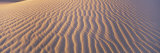 Wind Patterns in the Sand Photographic Print by Bill Hatcher