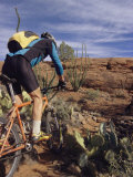 Rider Cycling Through Cacti, Arizona Photographic Print by David Edwards