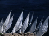 Fellucas Sailing, Aswan, Egypt Photographic Print by Izzet Keribar
