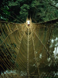 A Vine Bridge Resembling a Spiders Web Near Mamfe, Mamfe, Sud-Ouest, Cameroon, Photographic Print
