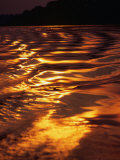 Sunlight Reflecting off the Dark Water of the Rio Negro, Amazonas, Brazil 写真プリント : トム・コックレム