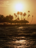 Coconut Trees at Sunset, Kohala Coast, USA Photographic Print by Holger Leue