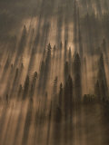 Early morning sunlight burns through a fog over a Minnesota forest Lámina fotográfica por Annie Griffiths Belt