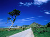 Gravel Road Linking Te Araroa to East Cape, Gisborne, New Zealand Photographic Print by Barnett Ross