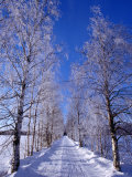 Snow on Country Road, Liminka, Finland Photographic Print by David Tipling