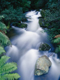 Time-Lapse of the Taggerty River Flowing over Rock Through the Rain Forest Photographic Print by Jason Edwards