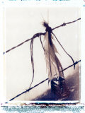 Feather and Hair Suspended on Barbed Wire Photographic Print by John Glembin
