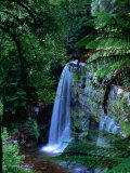 Russell Falls with Ferns in Foreground, Mt. Field National Park, Australia Photographic Print by John Banagan