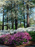 Norfolk Botanical Gardens, VA Photographic Print by Barry Winiker