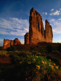Courthouse Towers with Wildflowers in Foreground, Arches National Park, USA Photographic Print by Carol Polich
