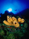 Yellow Tube and Red Sponges in Little Cayman, Bloody Bay Wall, West End Point, Cayman Islands Photographic Print by Michael Lawrence