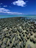 Stromatolites in Hamelin Pool, Near Monkey Mia, Hamelin Bay, Australia Photographic Print by John Banagan