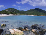 Coral, Salt Pond Bay, St. John, USVI Photographic Print by Jim Schwabel