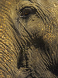 Close-up of Elephant, Thailand Photographic Print by Yvette Cardozo