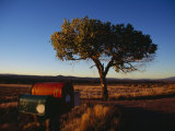 Lone Tree Stands in the Desert Grass along Highway 68 Photographic Print by Raul Touzon