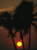 The Silhouette of a Trio of Palm Trees at Sunset Photographic Print by Klaus Nigge