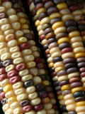 Close View of Rows of Multi-Colored Kernels in Autumns Indian Corn Photographic Print by Stephen St. John
