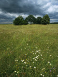 Cluster of Trees in a Field with Wildflowers under a Cloudy Sky Photographic Print by Klaus Nigge