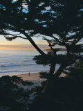 Sunset on Beach with Trees, CA Photographic Print by Claire Rydell