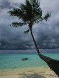 Palm Tree and its Shadow on a Beach Photographic Print by Todd Gipstein