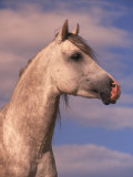 Close-up of White Horse with Sky in Background Photographic Print by Jim Oltersdorf