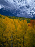Mt. Sneffel's Range in the San Juan Mountains, San Juan National Forest, USA Photographic Print by Mark Newman