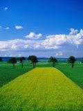 Mustard Field, Lower Austria Photographic Print by Walter Bibikow