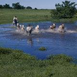 Herding Horses, Argentina Photographic Print