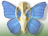 Skull with Butterfly Wings Photographic Print by Jim McGuire