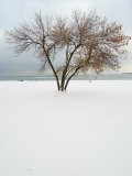 Tree and Snow Photographic Print by Dennis Macdonald