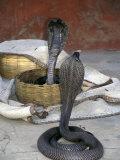 Snake Charming, Oris, India Stampa fotografica di Judith Haden