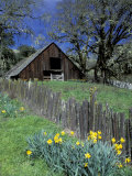 Fence, Barn and Daffodils, Northern California, USA Photographie par Darrell Gulin