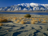 Dunes and Tumbleweeds, Walker Lake, Mt. Grant in Wassuk Range, Nevada, USA Photographic Print by Scott T. Smith