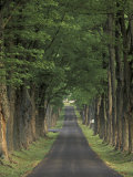 Tree-Lined Road, Louisville, Kentucky, USA Photographic Print by Adam Jones