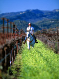 Equestrian Riding in a Vineyard, Napa Valley Wine Country, California, USA Photographic Print by John Alves