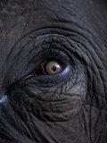 Elephant in Bandavgarh National Park, India Stampa fotografica di Theo Allofs